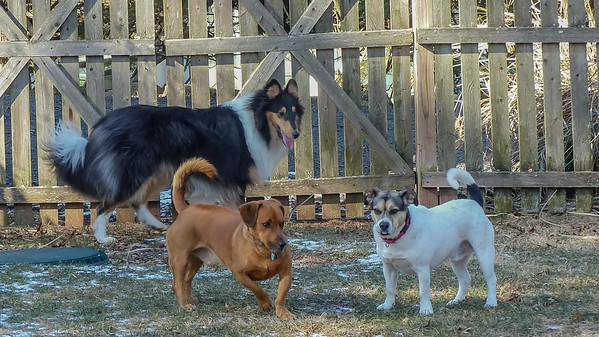 2019-02-03 Grisha, Shorty, and Scout