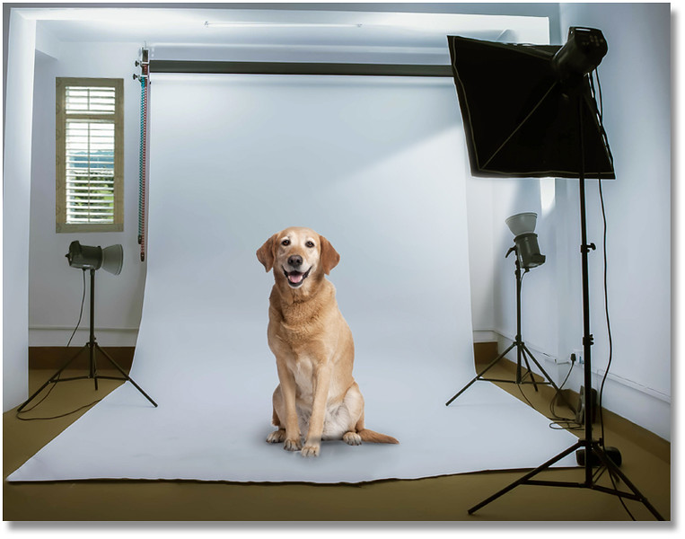 dog-studiob.jpg