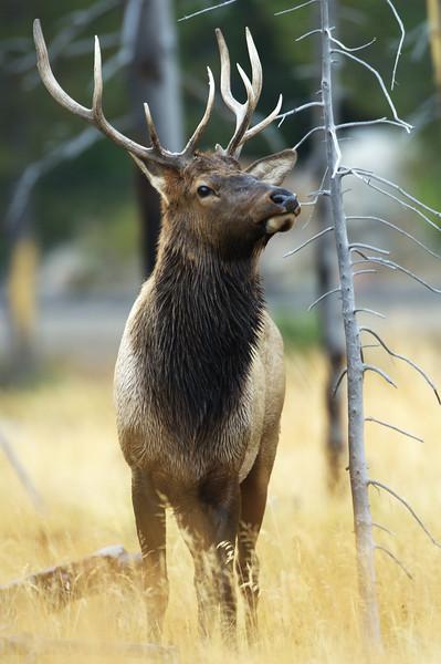 Wild Mammals (Selection)