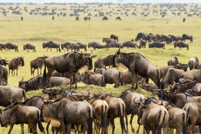 Kenya 2015-05344.jpg