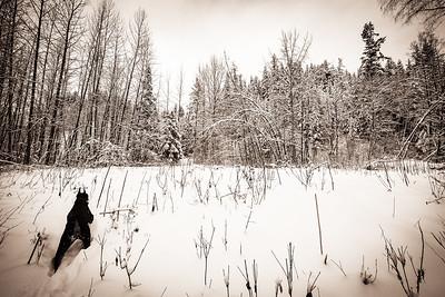 Beauty Of Snow