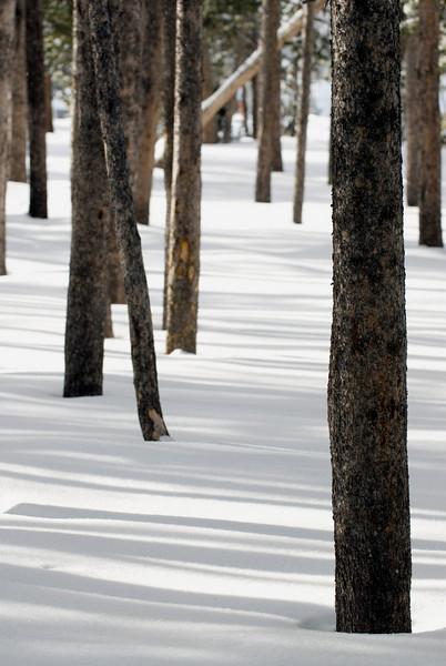 OldFaithful Trees3262.jpg