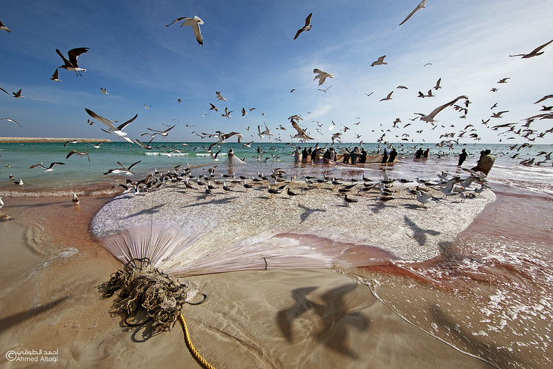 Sardine Season (87)- Dhofar.jpg