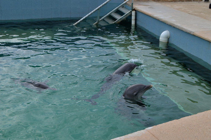 Swimming with the dolphins are also available.
