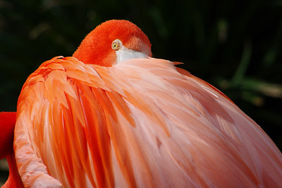San Diego Zoo - 4/3/ & 4/9 2010