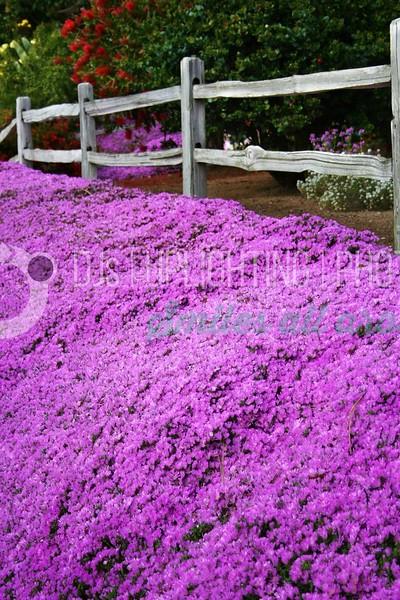 Flowers By Fence_batch_batch.jpg