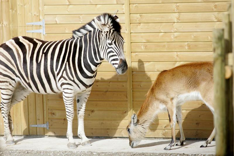 Newquay Zoo 136.jpg