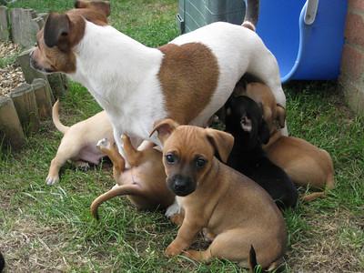 Puppy Pics