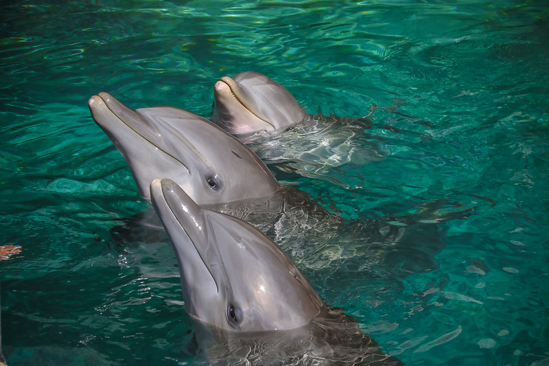 2019 August Dolphin Quest-102.jpg