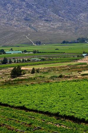 Rovos Train   Cape Wine Region   Paarl Mountain
