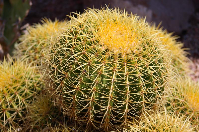 Cactus PHX 7-15-14 062.jpg