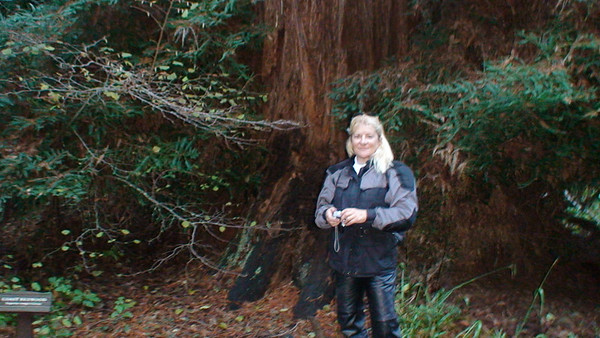 Muir Woods Ride