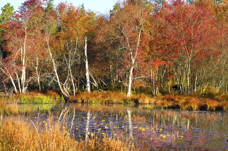 Pine Barrens 258.jpg
