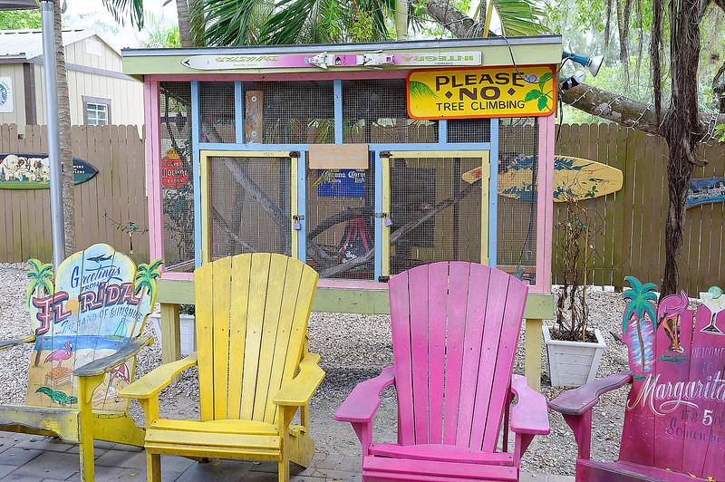 Island Cow Land Crab Waiting Area