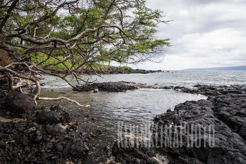 Maui2016-096.jpg
