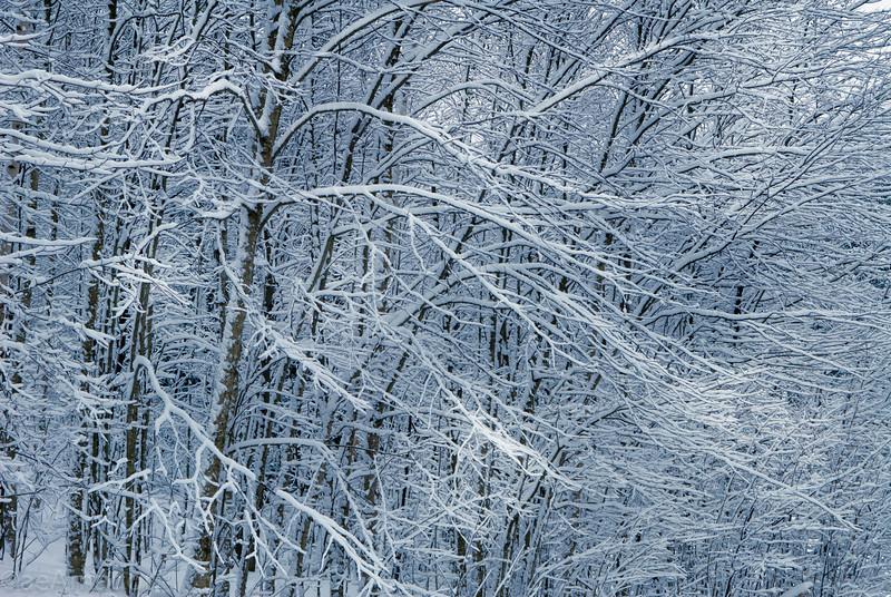 Winter Wonderland in Vermont-8.jpg