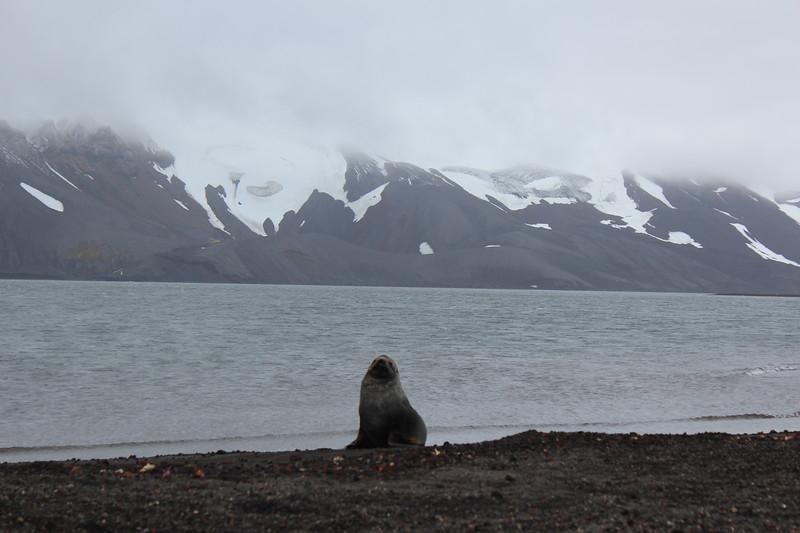 Antarctica 063.JPG