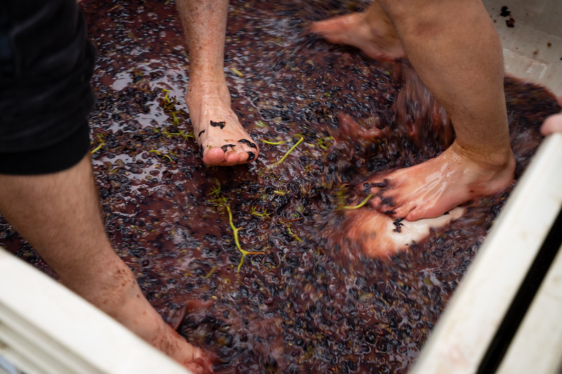 Grizzly Grape Stomp 2019