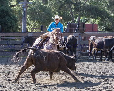 Versatility Ranch Horse Competition 2014