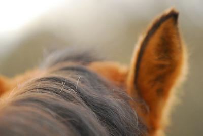 090124 Annie's Ear