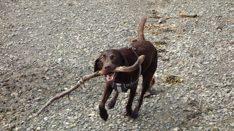 Things labs like to do...