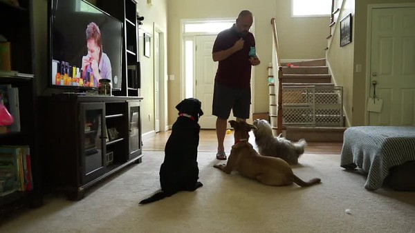Baboo Training Video