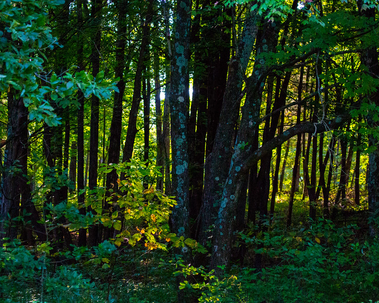 Kentucky woods