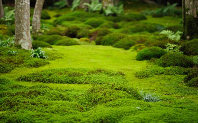 Moss Garden Gio-ji Temple Arashiyama image copyright Jeffrey Friedl