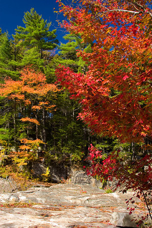 Colorful Autumn Foliage along a Rocky Mountain Trail