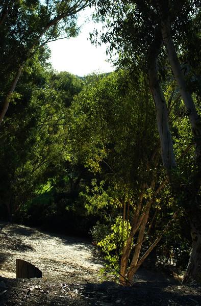 ElysianPark012-TreesDownAHill-2006-10-18.jpg