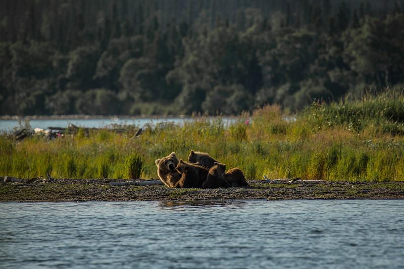 Katmai Bears-22.jpg