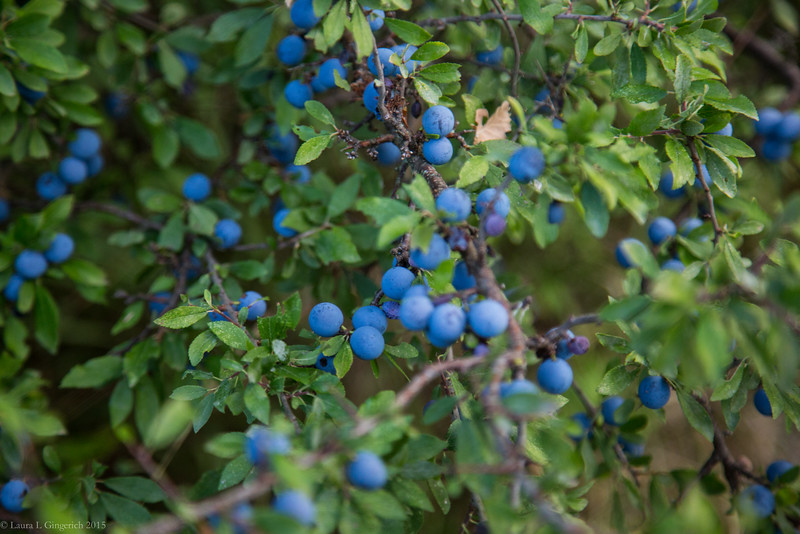 ...and blueberries. .