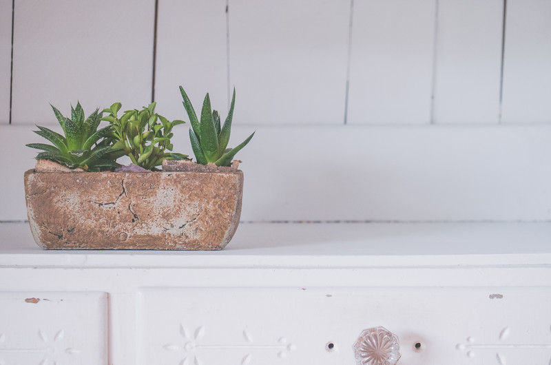 Succulents In White Cabinet-3.jpg