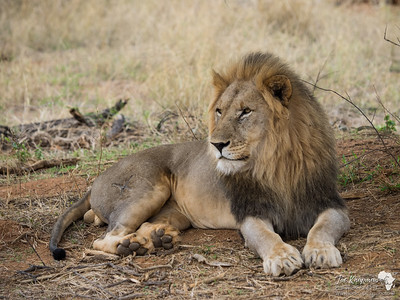 King at rest