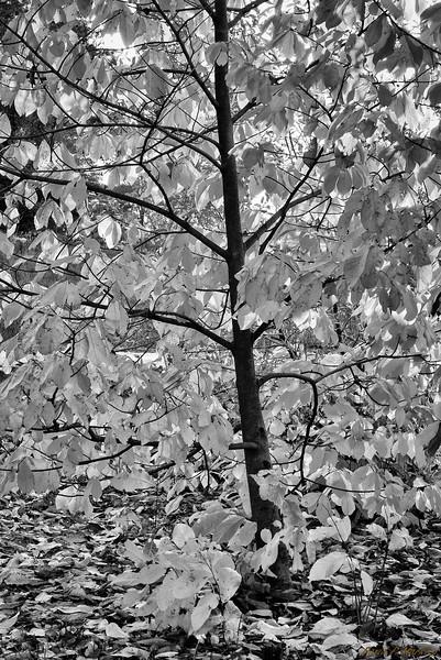 Faltering Tree