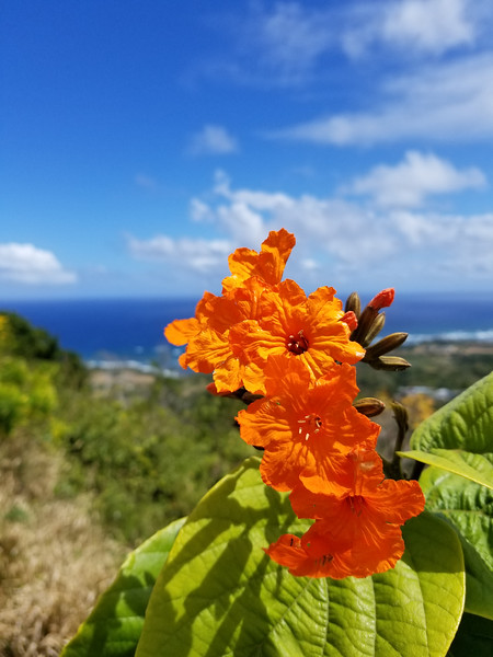 Barbados (44).jpg
