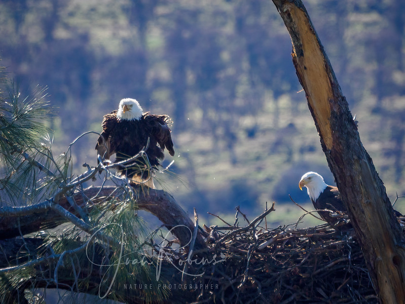 210221-Lassen Eagles Feb-2216909-Edit.jpg