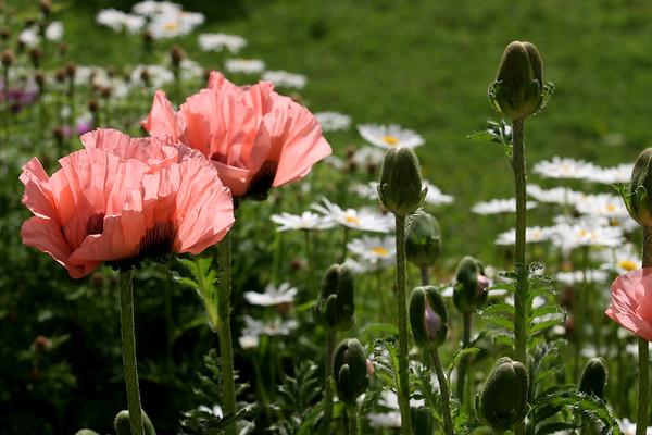 Flowers_060510_0150.JPG