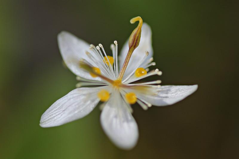 forestflower.jpg