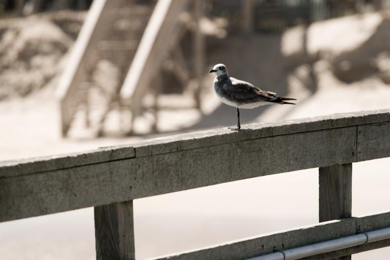 Bird_on_a_Rail.jpg