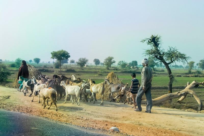Roads_in_India_1206_060.jpg