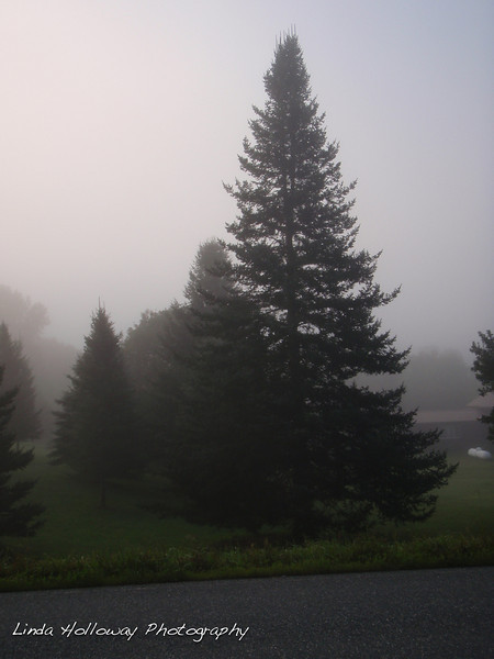 It was foggy this morning.  The Christmas trees are getting more plentiful the farther north we go.