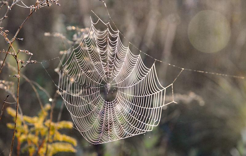 BoettlerPark-spiderweb.jpg