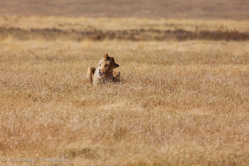 Ngorongoro-28.jpg