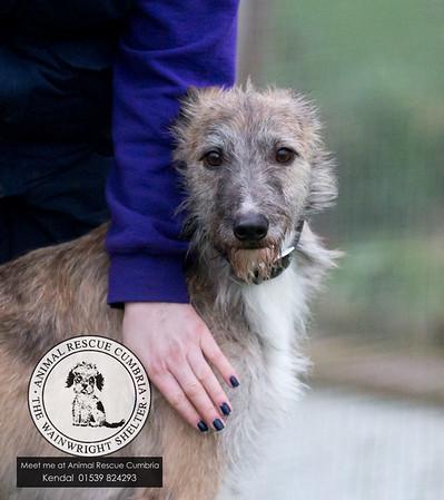Animal Rescue Dogs Dec 2015