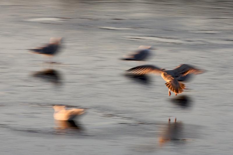 Manchester Seagull.jpg