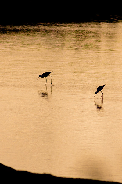 Stilts At Dusk