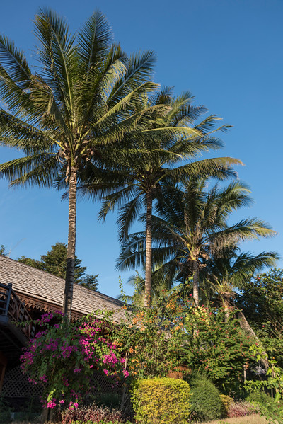 Low angle view of palm trees, Oudomxay Province, Laos