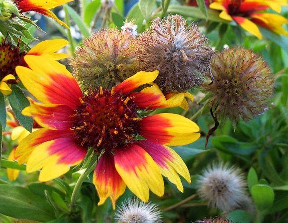 sundayflora1121.jpg