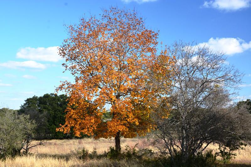 Autumn at the Eads Ranch - 018a.jpg